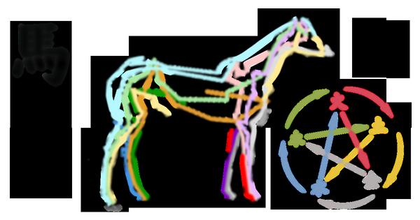 Présentation du shiatsu pour chevaux