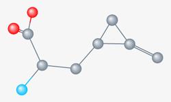 Structure moléculaire de l'Hypoglycine A