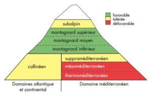 Répartition de l'érable sycomore selon les étages de végétation