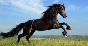 Shiatsu sur cheval