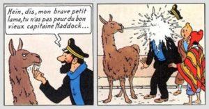 Lama et Haddock